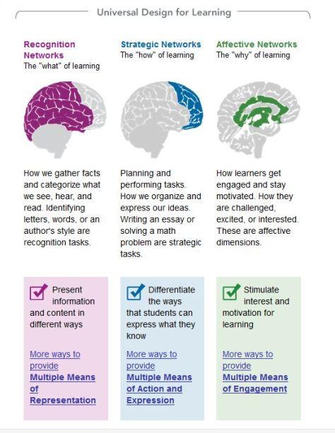 brain UDL